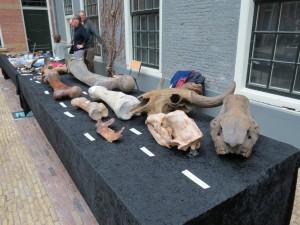 Fossiele botten geologie weekend geakring Fryslân