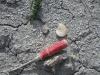 Fossielen zoeken zonder gereedschap