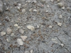 Uitgespoelde fossielen Toarcien