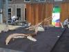 geakring-friesland-groot-masosaurus