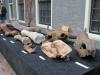 vondsten werkgroep pleistocene zoogdieren