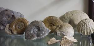 geprepareerde fossielen Yma Poitou