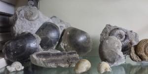 geprepareerde fossiel 2 Yma Poitou