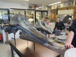 Klaas Post fossielen uit de Westerschelde