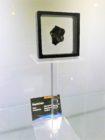 de Seymchan meteoriet