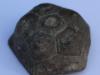kopje-van-een-zee-lelie, vondst Wietse Smit