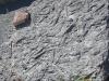 zee-bodem uit het Ordovicium